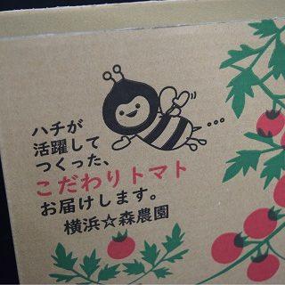 トマト用 ダンボールケース (事例2)
